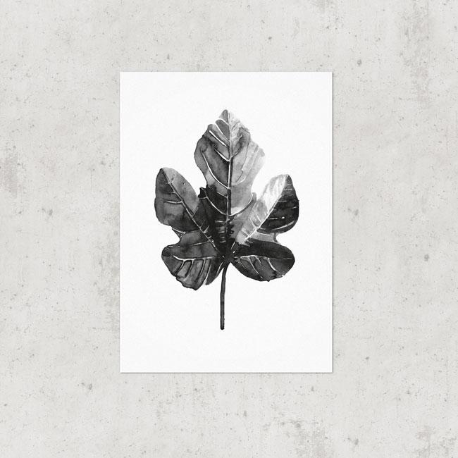 Vijgenblad poster botanisch zwart wit